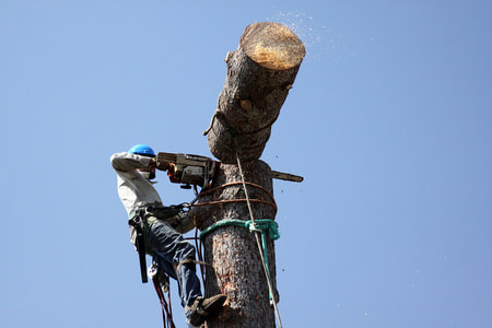 tree pruning Brampton